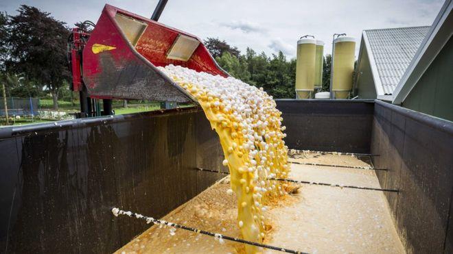 El escándalo de los huevos contaminados con pesticida