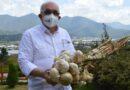 Fernando Durán resalta éxito cosecha de ajo en Constanza financiada por su gestión